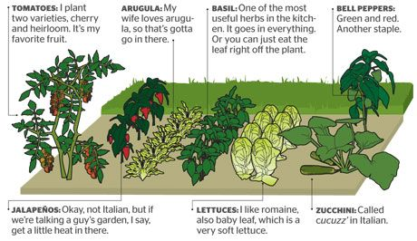 Vegetable Garden Layouts - Planning a Vegetable Garden