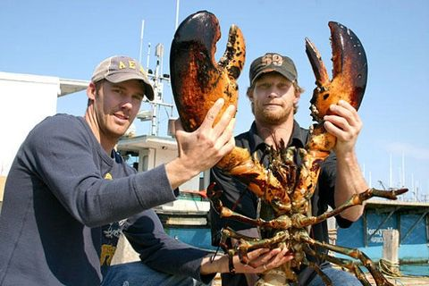 Giant Lobster Catch - 22 Pound Lobster in Canada