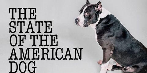 Dog breed, Dog, Vertebrate, Carnivore, Mammal, Snout, Jaw, Working animal, Terrestrial animal, Companion dog,