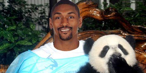 Vertebrate, Panda, Facial expression, Facial hair, Tooth, Moustache, Terrestrial animal, Fur, Horn, Beard,