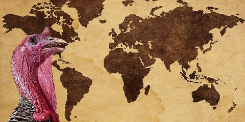 Brown, World, Beige, Bird, Paint, Beak, Illustration, Galliformes, Painting, Art paint,