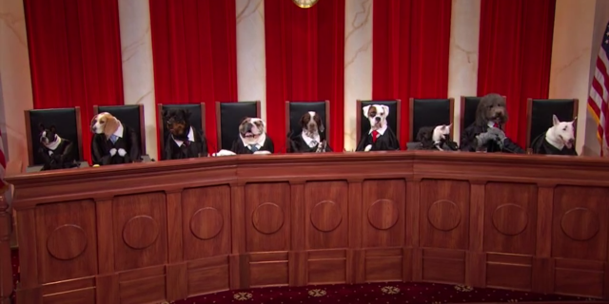 John Oliver S Supreme Court Of Dogs Is In Session John