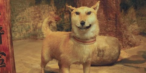 Wood, Brown, Organism, Carnivore, Dog breed, Dog, Terrestrial animal, Snout, Fawn, Liver,