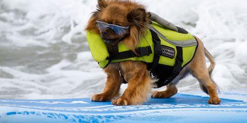 Dog breed, Dog, Vertebrate, Carnivore, Collar, Dog supply, Mammal, Sporting Group, Dog collar, Dog clothes,