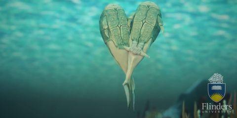 Green, Leaf, Teal, Colorfulness, Logo, Aqua, Turquoise, World, Brand, Macro photography,