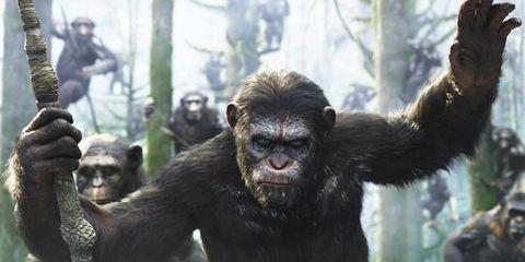 Organism, Natural environment, Skin, Primate, Vertebrate, Shoulder, Terrestrial animal, Snout, Jaw, Adaptation,