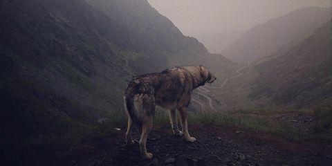 Mountainous landforms, Highland, Mountain range, Hill, Atmospheric phenomenon, Valley, Terrain, Mountain, Working animal, Hill station,