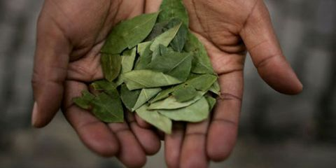Finger, Skin, Hand, Leaf, Ingredient, Thumb, Flowering plant, Nail, Herb, Gesture,