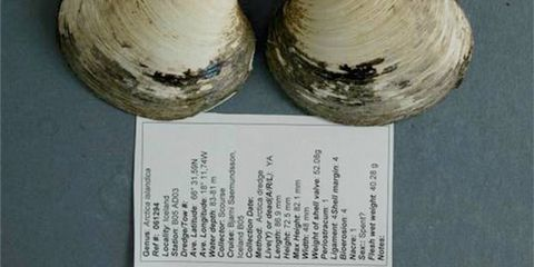 World, Natural material, Beige, Bivalve, Collection, Paper,