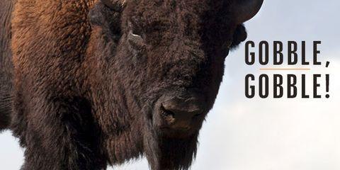 Organism, Terrestrial animal, Bison, Snout, Bovine, Horn, Wildlife, Liver, Fur, Fawn,