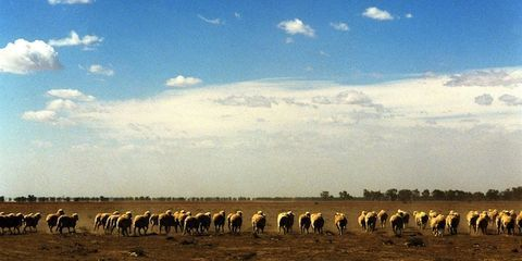 Sky, Cloud, Grazing, Natural landscape, Landscape, Plain, Pasture, Cumulus, Herd, Terrestrial animal,