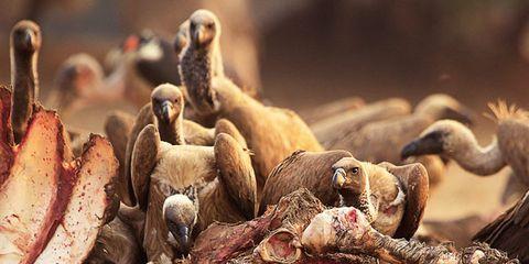 Organism, Adaptation, Terrestrial animal, Wildlife, Herd,