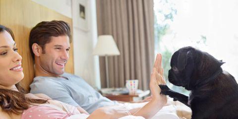 Comfort, Dog, Dog breed, Carnivore, Lamp, Linens, Companion dog, Bedding, Lampshade, Curtain,