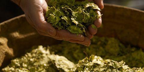 Green, Finger, Ingredient, Leaf, Food, Leaf vegetable, Whole food, Thumb, Weed, Condiment,
