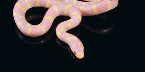 Colorfulness, Font, Violet, Still life photography, Snake, Symbol, Number, Spiral, Serpent, Macro photography,