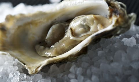 The Best Coast to Buy Oysters From
