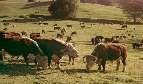 'Grass-Fed' Beef Is a Scam and a Few Other Things You Need to Know About Your Meat