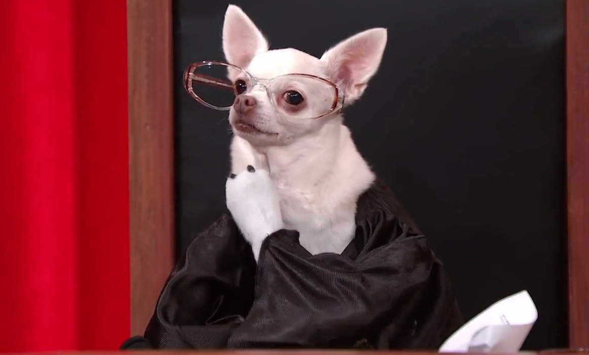 Someone Used John Oliver's Supreme Court Of Dogs To Reenact An