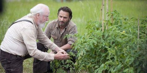 Agriculture, Soil, Adaptation, Beard, Farm, Plantation, Facial hair, Crop, Farmworker, Field,