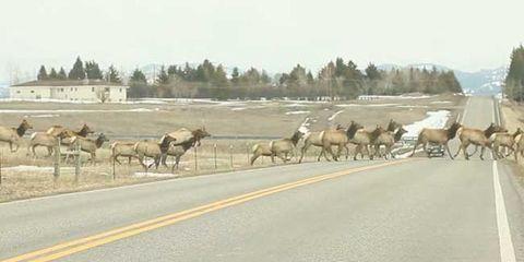 Herd, Plain, Working animal, Wildlife, Ranch, Pack animal, Horse, Herding, Village, Animal migration,