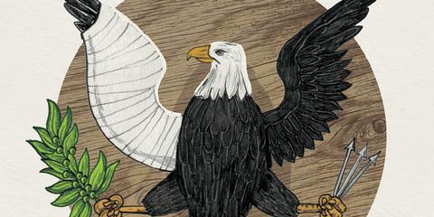 Bald eagle, Beak, Sea eagle, Wing, Bird, Accipitridae, Art, Accipitriformes, Illustration, Bird of prey,