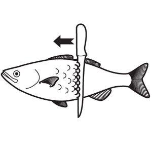rinse dead fish