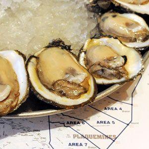 gulf coast oysters