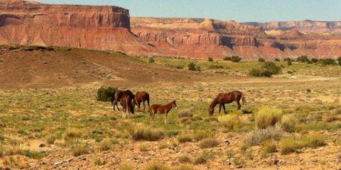 West Horses