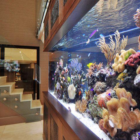 Aquarium-2-43