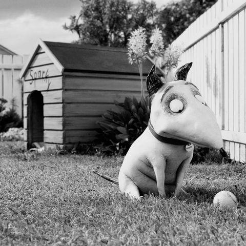 Behind The Scenes Tim Burton S Frankenweenie