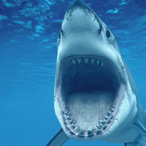 shark-43