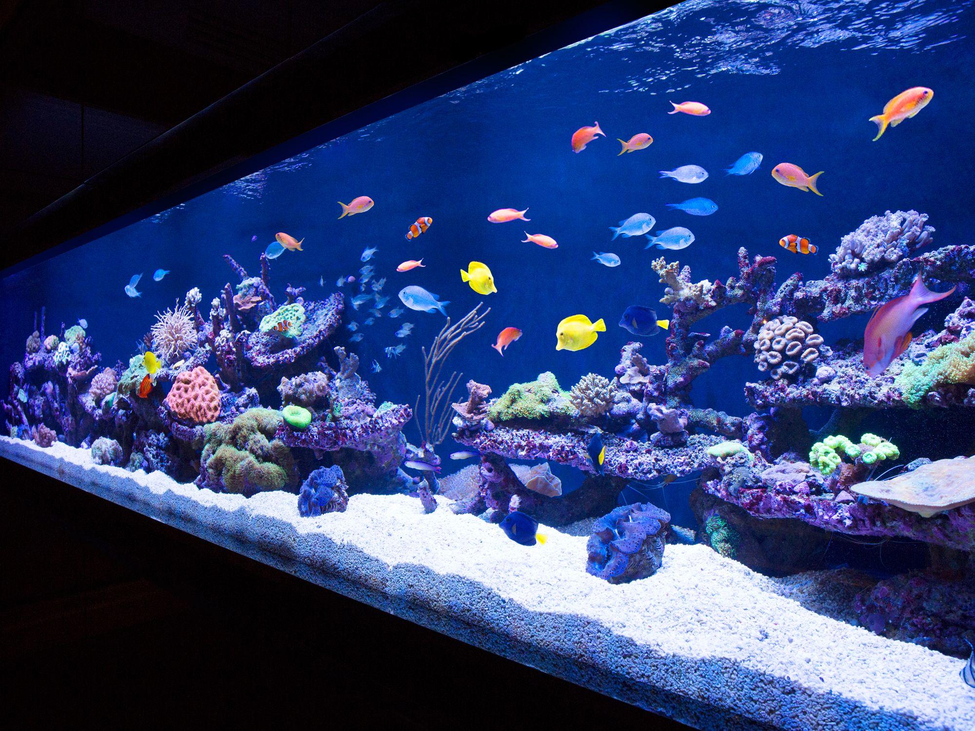 10 of the world s coolest aquariums rh esquire com