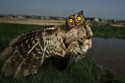 Nature, Owl, Daytime, Organism, Natural environment, Branch, Bird, Bird of prey, Photograph, Adaptation,