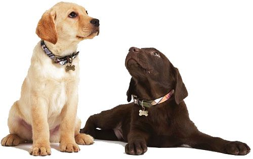 J.Crew-Leather-Backed-Madras-Dog-Collar.jpg