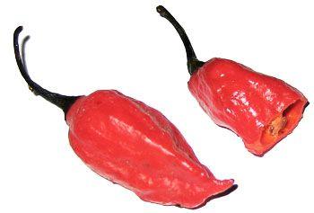 Naga-Jolokia-The-World's-Hottest-Chile-Pepper.jpg