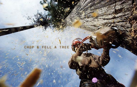 chop-and-fell-a-tree