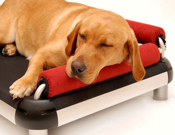 doggy-snooze-2-gear-patrol
