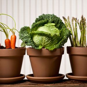 upgrade-your-meal-use-less-processed-foods