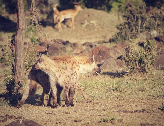 a-brief-history-of-the-safari-gear-patrol-4