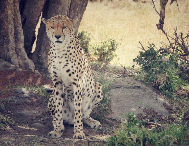 a-brief-history-of-the-safari-gear-patrol-5