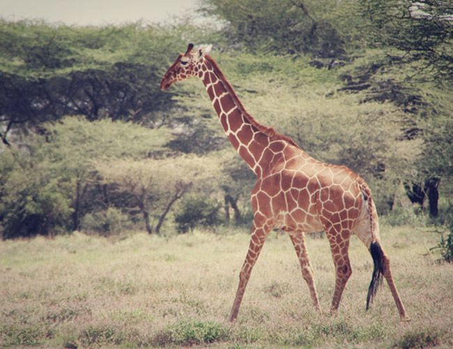 a-brief-history-of-the-safari-gear-patrol-9