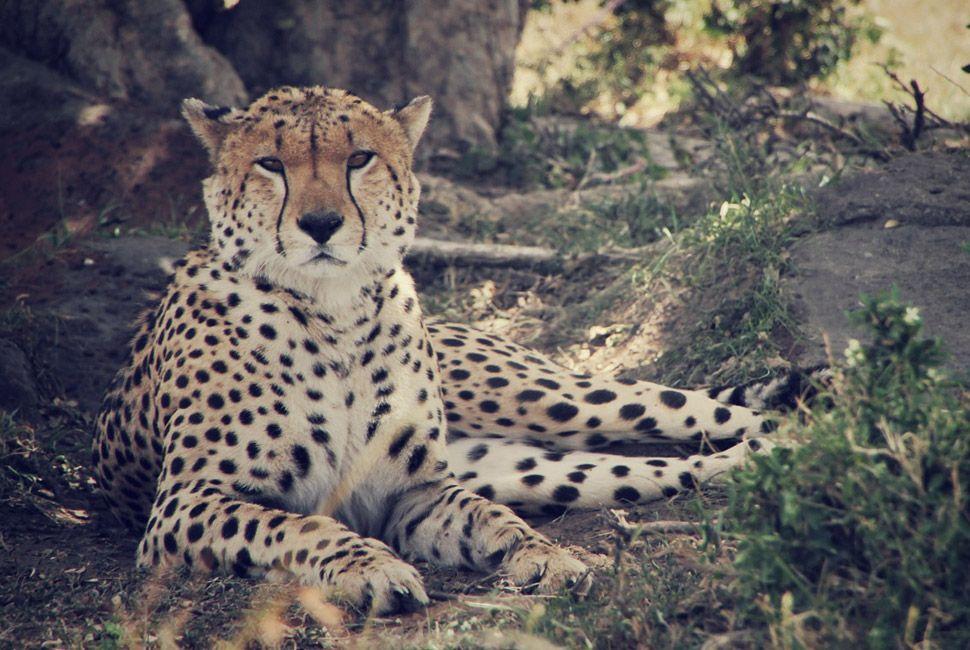 kenya-safari-slide-10
