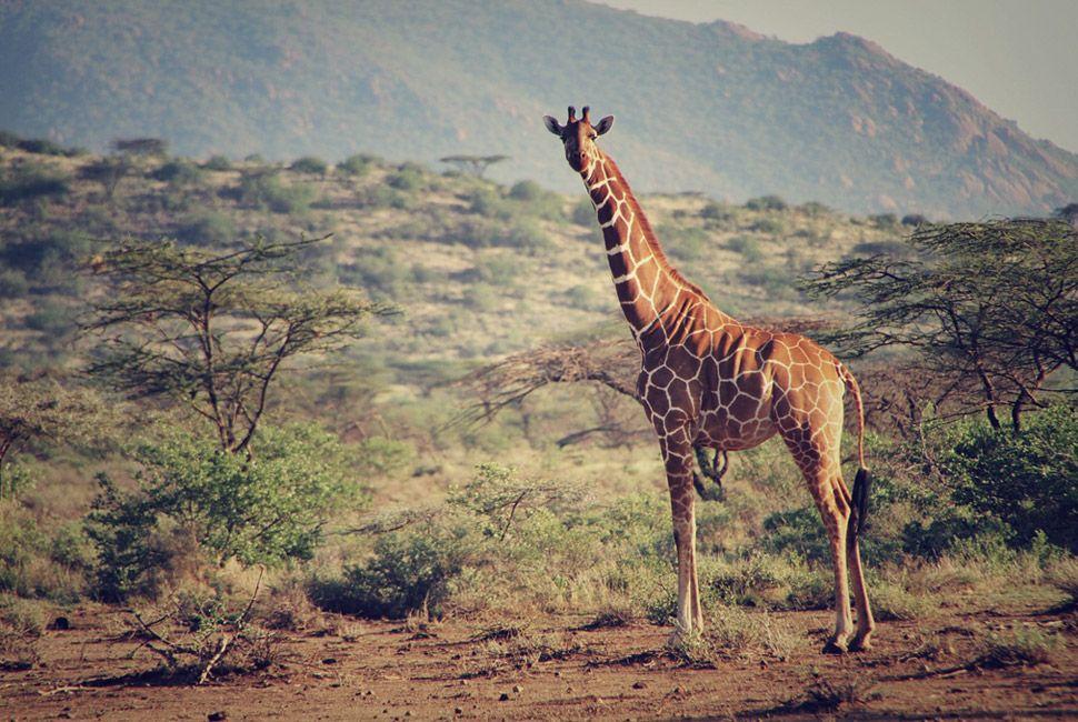 kenya-safari-slide-11