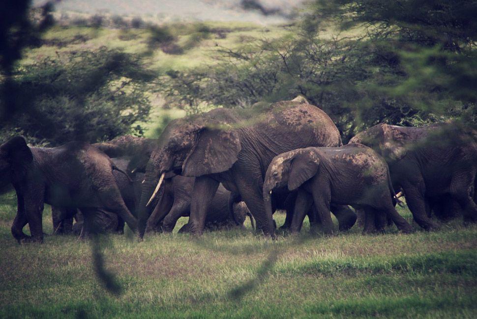 kenya-safari-slide-2