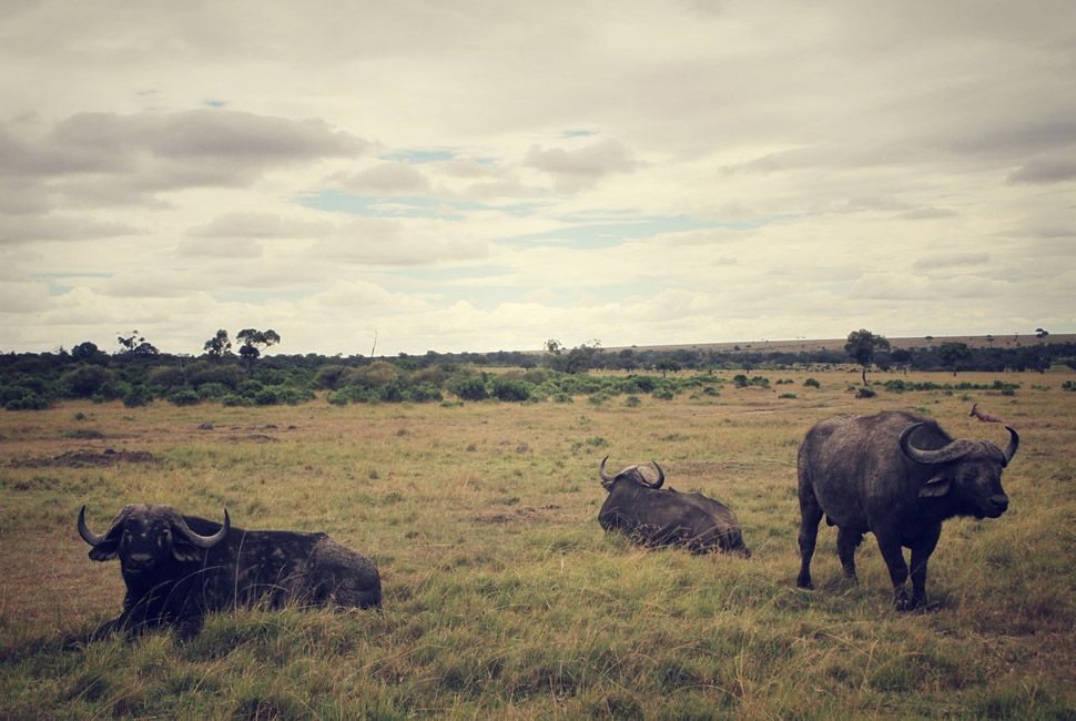 kenya-safari-slide-4