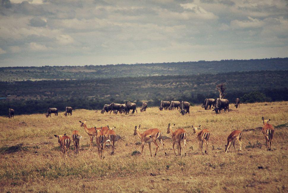 kenya-safari-slide-5