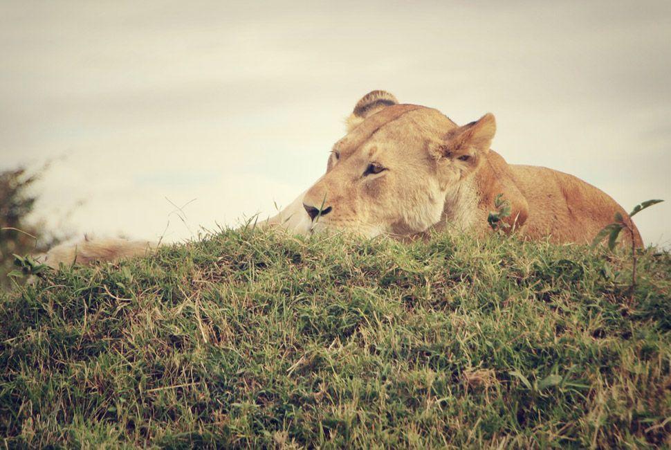 kenya-safari-slide-6