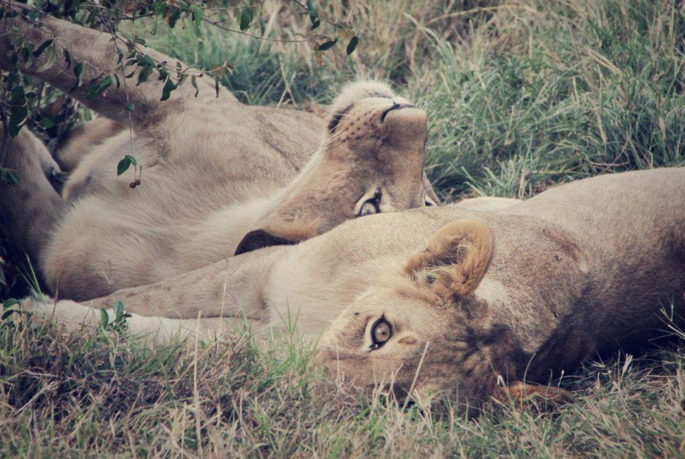 kenya-safari-slide-7