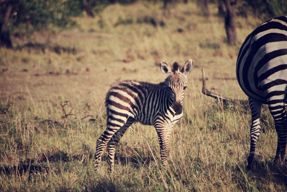 kenya-safari-slide-9