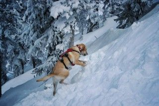 avalanche-rescue-let-loose-the-dogs-of-snow-gear-patrol-slide-10